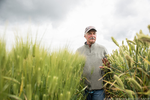 Pat Hayes is a barley researcher and breeder at Oregon State University.
